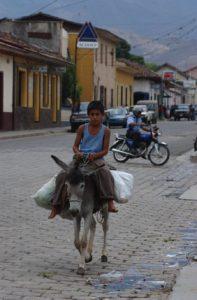 Cargar agua, leña y ser medio de transporte han sido los trabajos de los burros en Somoto y Ocotal. Foto Archivo La Prensa.