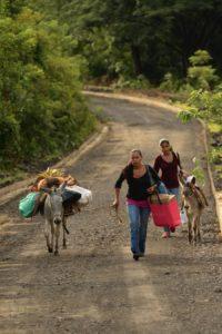 Desde la madrugada las familias salen caminando de sus comunidades acompañadas de sus burros y los artículos para decorarlos y desfilar en Ocotal. Foto U. Molina.