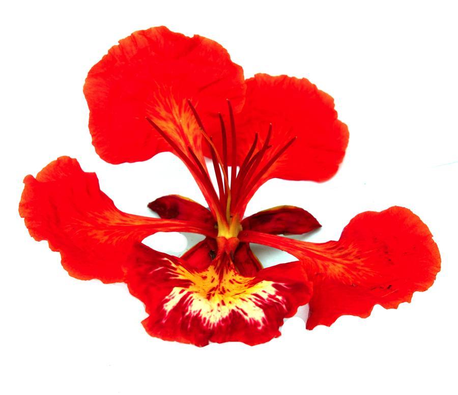 259-mag-flormalinche