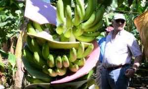Piero Coen/Empresario de Chinandega ,Posa en su casa y Bananera.Foto Uriel Molina/ LA PRENSA. Exportadores. Magazine.