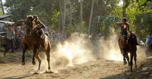 Carrera de caballos. Magazine