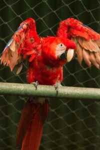 zoológico nacional, animales, aves