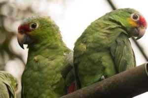 aves, zoológico nacional.