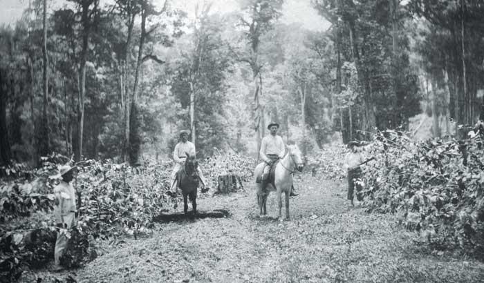 El cultivo y la exportación de café fue una de las atracciones que los migrantes europeos encontraron en Nicaragua