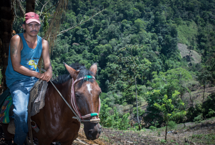 """El campesino no ha perdido su habilidad de buen jinete. A lomos de su caballo el """"chingo"""" recorre sus tierras. LA PRENSA/O.Navarrete"""